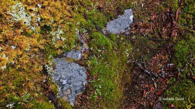 Sentier (inscriptions sur la pierre)